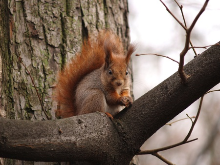 The squirrel sits on a branch         photo