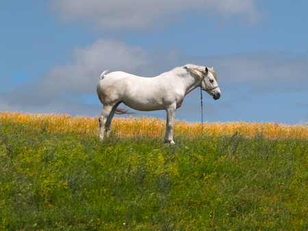 The white horse costs on a grass photo