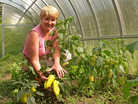 The woman with a crop of sweet pepper in a hothouse photo