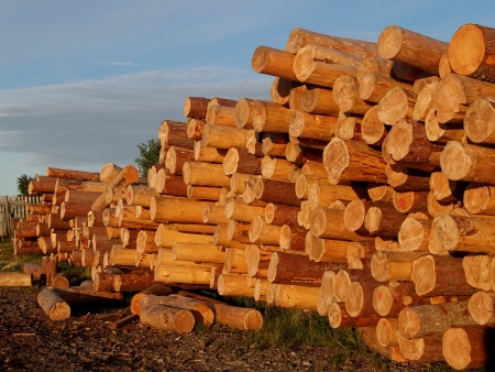 stored: The stored logs of coniferous breeds