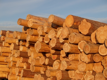 shined: The logs shined with the sun