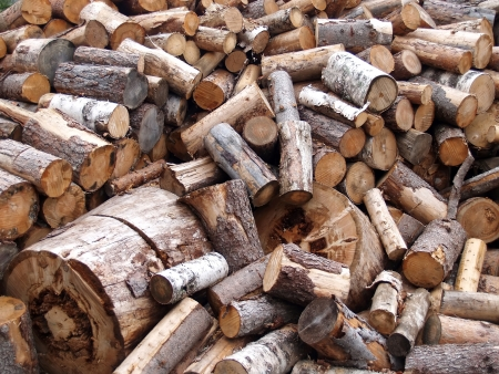 The dumped firewood Stock Photo - 16843655