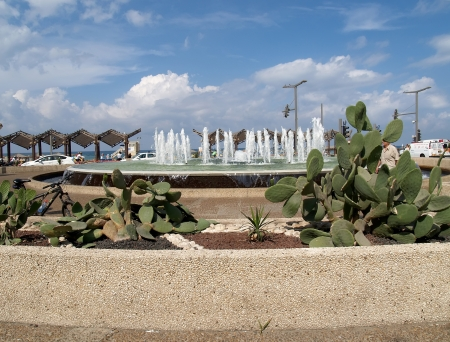 Israel  Prickly pears and the fountain on the embankment of Tel Aviv