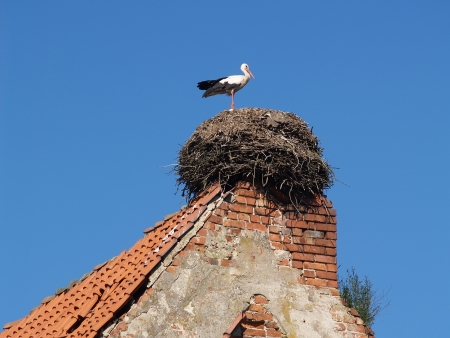 Stork in a nest on an old tile roof