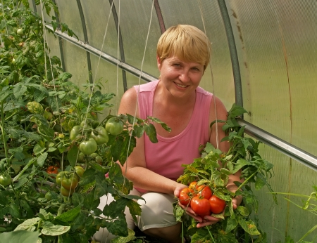 The woman with a crop of tomatoes in the greenhouse photo