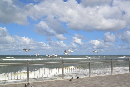 Seagulls fly over the Baltic Sea photo