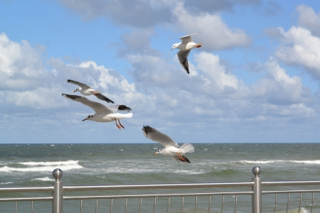 Seagulls fly over the Baltic Sea Stock Photo