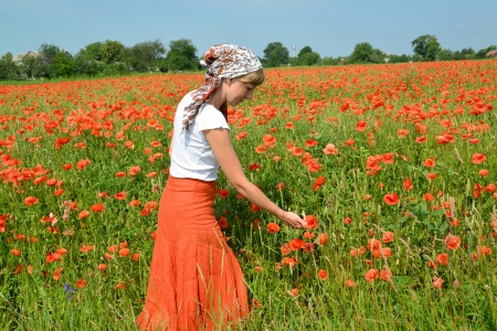 The young woman admires the poppies growing in a field photo