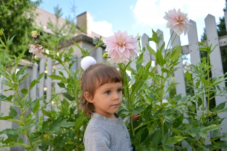 The little girl costs among blossoming pink dahlias photo