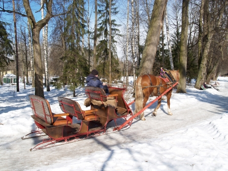 Pavlovsk  The horse harnessed in sledge, goes on the park avenue photo
