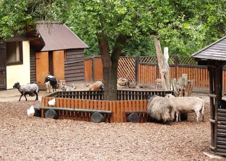hoofed animal: Los animales ungulados dom�sticos refugian en un zool�gico