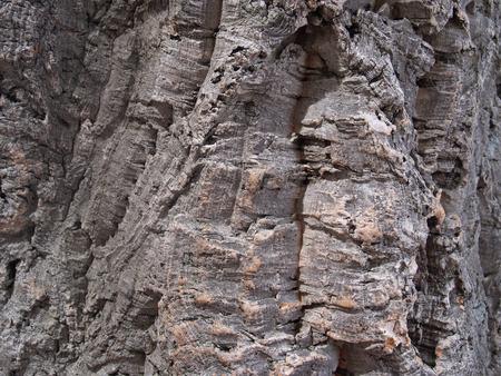 pith: Bark of a pith oak, background