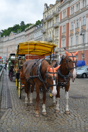 karlovy vary: Horse vehicle for driving of tourists in Karlovy Vary, the Czech Republic