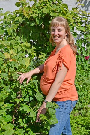 The pregnant woman stands near a bush of black currant  photo