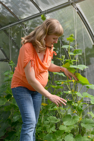 The pregnant woman works in the greenhouse  photo