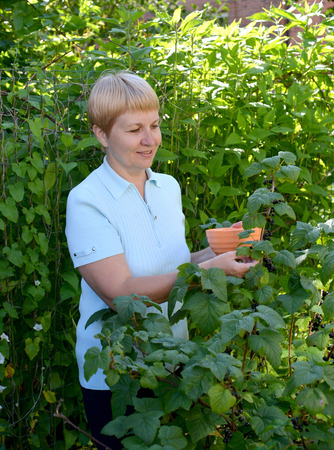 50 to 55 years: woman of average years picks berries of black currant