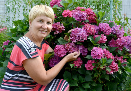 50 to 55 years: The happy woman of average years near a blossoming hydrangea in a garden