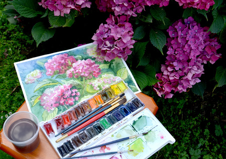 The drawing Blossoming Hydrangeas, water color paints and flowers in a garden photo