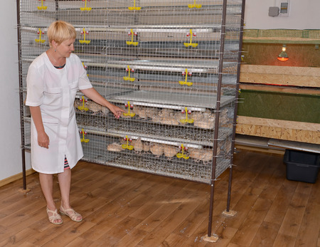 50 to 55 years: The woman-farmer stands near a cage with quails Stock Photo