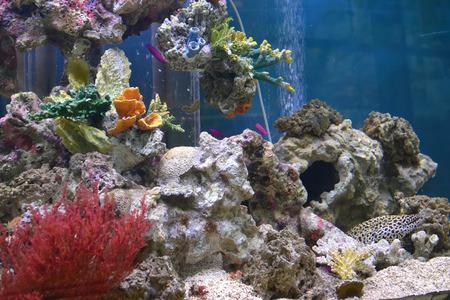 aquarian fish: Aquarium with exotic fishes and corals Stock Photo