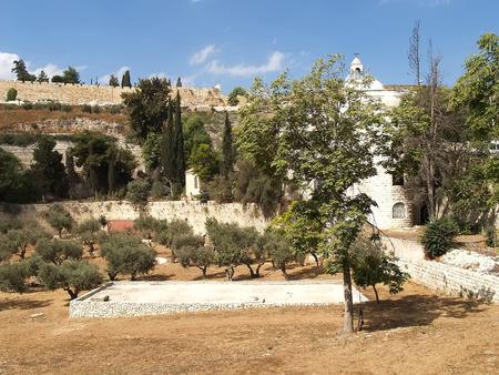 serf: Vue de la montagne du Temple. J�rusalem, Isra�l