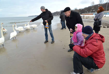 baltic people: People feed swans on the bank of the Baltic Sea Stock Photo