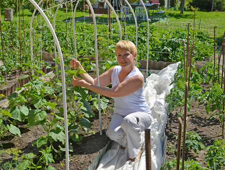 45 50 years: The woman of average years ties up cucumber plants in a kitchen garden Stock Photo