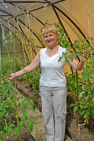 average woman: The woman of average years shows plants of tomatoes in the greenhouse