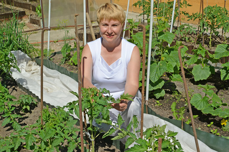 average woman: The woman of average years tears off stepsons of tomatoes in a kitchen garden Stock Photo