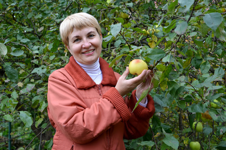 50 to 55 years: The woman of average years holds in hand apple about an apple-tree Stock Photo