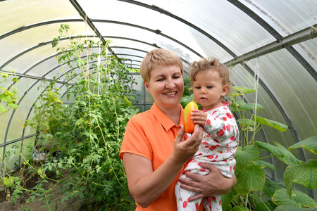 50 to 55 years: The woman gives to the little granddaughter sweet paprika in the greenhouse