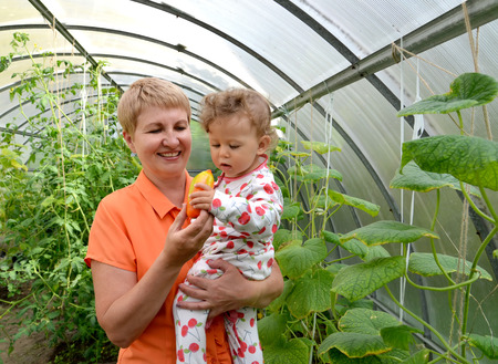 50 to 55 years: The woman gives to the little granddaughter sweet pepper in the greenhouse
