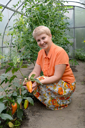 The woman of average years shows fruits of sweet pepper in the greenhouse