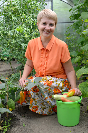 50 to 55 years: The woman of average years reaps a crop of vegetables in the greenhouse