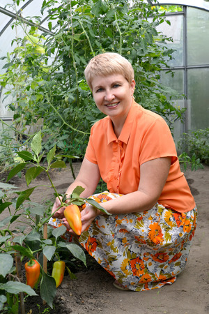 50 to 55 years: The woman of average years shows fruits of sweet pepper in the greenhouse