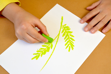 nurseries: Drawing of a stalk and leaves for production of a card in the fluffy application equipment