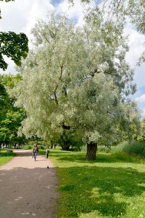 petrodvorets: PETERHOF, RUSSIA - JULY 24, 2015: A corner of Kolonistsky park in a summer sunny day