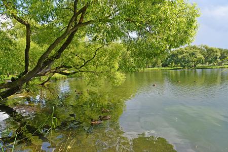 holguin: View of Holguin a pond Stock Photo