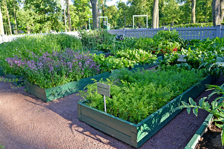 PETERHOF, RUSSIA - JULY 24, 2015: A view of a kitchen garden for imperial children. Alexandria park Editorial