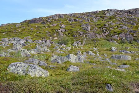 tundra: The stony tundra in the north of the Kola Peninsula. Summer landscape