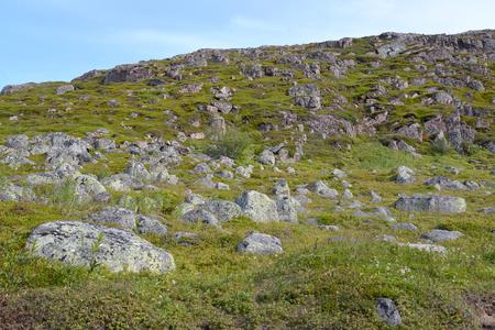 The stony tundra in the north of the Kola Peninsula. Summer landscape