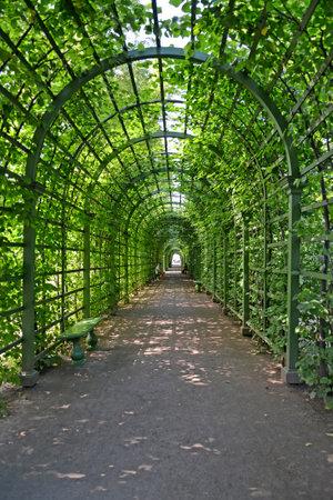 ST. PETERSBURG, RUSSIA - JULY 09, 2014: Bosket in the Summer garden
