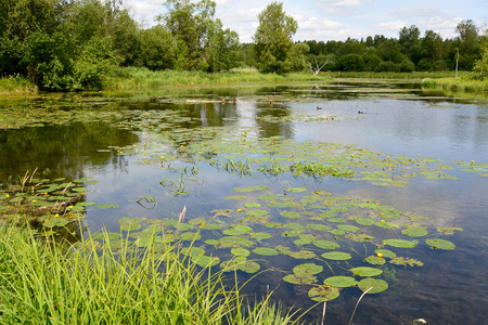protected plant: The river Warm in vicinities of Gatchina. Leningrad region