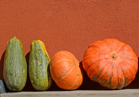 Big orange and green pumpkins against the background of a wall