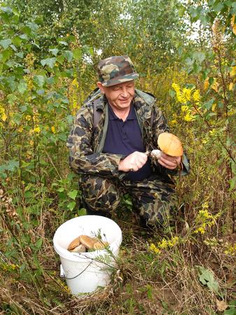 50 55 years: The man cuts off a mushroom an aspen mushroom in the wood  Stock Photo