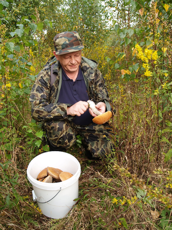 50 55 years: The elderly man gathers mushrooms in the wood