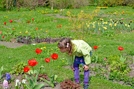 considers: The little girl admire tulips in a spring garden