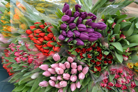 Background from the multi-colored cut-off tulips Stock Photo