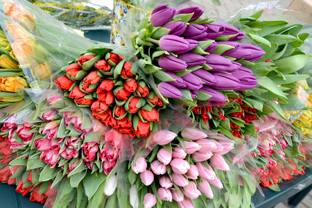 Bouquets of multi-colored tulips lie on a counter for sale