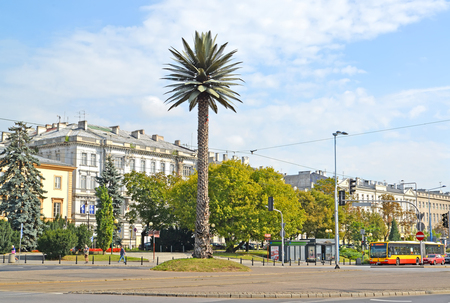 WARSAW, POLAND - AUGUST 23, 2014: A view of a palm tree on Charles de Gaulles outcome near Sredmestye